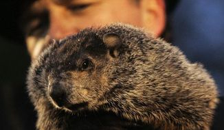 John Griffiths, one of the handlers of weather predicting groundhog Punxsutawney Phil, holds Phil on Ground Hog's Day in Punxsutawney, Pa. on Saturday, Feb. 2, 2008. The Groundhog Club said Phil saw his shadow and predicted six more weeks of winter. (AP Photo/Keith Srakocic)
