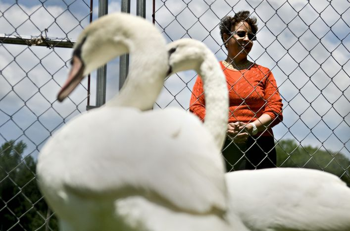 Ms. Johnson named the new swans that occupy a pond on her estate Barack and Michelle after two of her favorite Chicago residents.