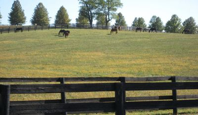 Thorough-breds graze at the Eagle Valley Farm in Nicholas County near Carlisle, a part of Kentucky's famed Bluegrass region. Politicians in Washington have decreed that the area is in Appalachia, and the move qualifies the community to receive federal funding to bolster its economy. (AP photo)