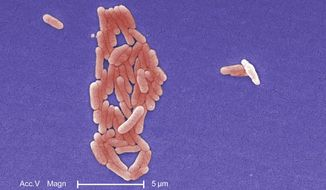 Clustered Gram-negative Salmonella Typhimurium bacteria, the type linked to a salmonella outbreak that resulted in the recall of more than 1,500 foods, are shown under a magnification of 5000X in a colorized scanning photomicrograph. (AP Photo/Centers for Disease Control and Prevention, Janice Haney Carr) ** FILE **