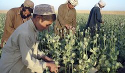 **FILE** Afghan farmers work in an opium poppy field in Nawa district of Helmand province, south of Kabul, Afghanistan, on April 25, 2009. (Associated Press)