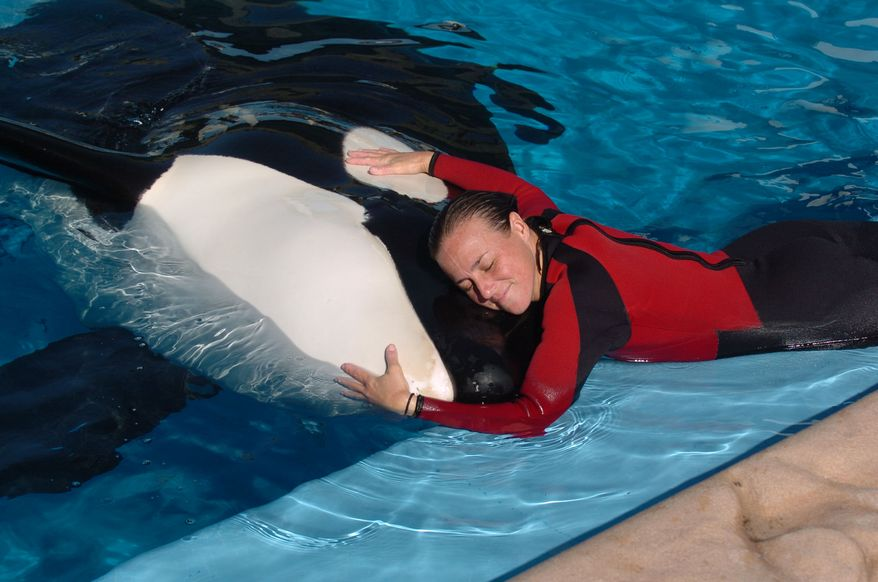 ** FILE ** Dawn Brancheau, a whale trainer at SeaWorld Adventure Park, is shown while performing in 2005. Ms. Brancheau was killed in an accident with a killer whale at the SeaWorld Shamu Stadium on Wednesday afternoon, Feb. 24, 2010. (AP Photo/Orlando Sentinel, Julie Fletcher)