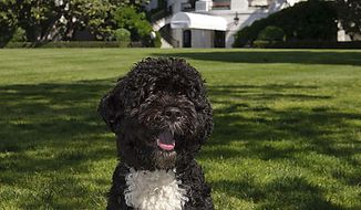 """This June 19, 2009, file photo provided by the White House shows the official portrait of the Obama family dog Bo, a Portuguese water dog, on the South Lawn of the White House. The Obama White House, known for embracing the newest digital trends, invited Internet users to download and print out the baseball card for Bo. The card said you can call him the """"first dog of the United States."""" (AP Photo/Official White House Photo, Chuck Kennedy, File)"""