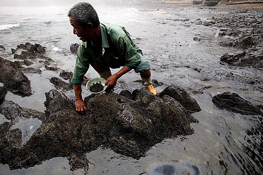 In this photo taken Wednesday, July 21, 2010, and released by Greenpeace on July 22, 2010, an employee scoops up dead snails at the Guotai Water Products Farm, less than a mile away from the site of the oil spill at Xingang Port in Dalian in northeast China's Liaoning province. China National Petroleum Corp. said Thursday a vital pipeline has resumed operations after an explosion caused the country's largest reported oil spill. Cleanup efforts, marred by the drowning death of a worker, continued over 165 square mile stretch of water blanketed in thick, dark oil Thursday, after an official warned the spill posed a severe threat to sea life and water quality. (AP Photo/Greenpeace, Jiang He)