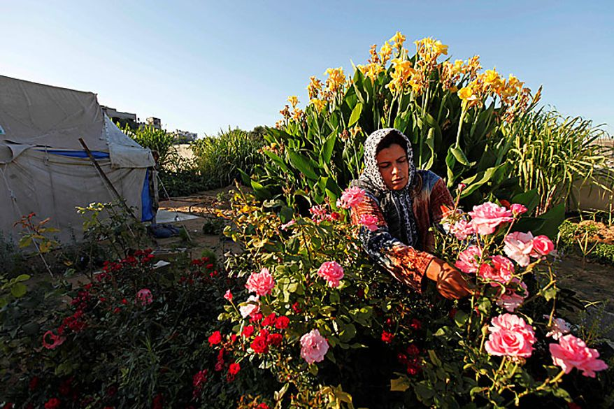 Palestinian Wafa Awaja, 34, takes care of flowers in her garden outside the makeshift structures that house her family, in Beit Lahiya, northern Gaza Strip, Thursday, June 10, 2010. The Awajas are among thousands of families whose houses were destroyed during Israel's three-week military offensive against Hamas-ruled Gaza, launched in December 2008 with the aim of halting Hamas rocket attacks. An Israeli forces bulldozer flattened the Awajas' house and as the family tried to flee, bullets hit Wafa, her husband Kamal and their 8-year-old son Ibrahim, who bled to death in the street. (AP Photo/Lefteris Pitarakis)