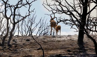 A mule deer and her fawn make their way through a burnt-out canyon at the Old West Ranch southeast of the Mojave Desert town of Tehachapi, Calif., on Wednesday. (Associated Press)