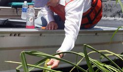 Interior Secretary Ken Salazar takes a closer look Thursday in an area that was open water two years ago before a wetlands restoration project in the Delta National Wildlife Refuge off Louisiana. He and other federal officials led an inspection tour of the refuge in the aftermath of the Gulf oil spill.