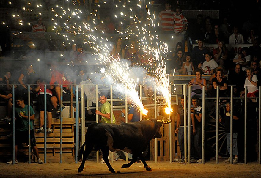 A bull with flaming horns runs during Toro Embolao in Amposta, Spain, early Thursday, Aug. 19, 2010. (AP Photo/Manu Fernandez)