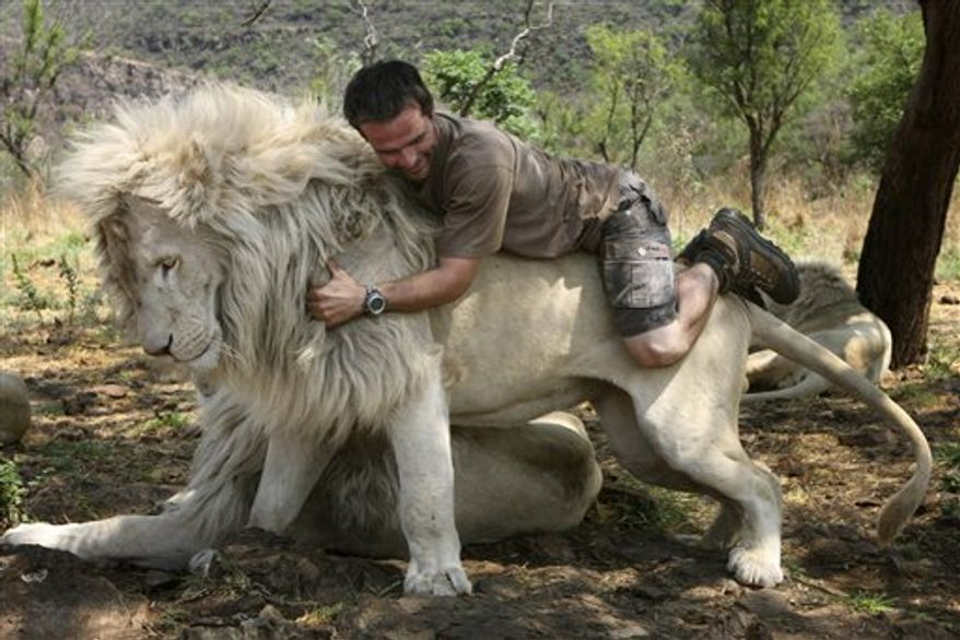 """In this photo taken Monday Oct. 11, 2010, Kevin Richardson, a.k.a. the Lion Whisperer piggybacks on the back of a lion in their enclosure at the Kingdom of the White Lion park in Broederstroom, near Johannesburg South Africa. A new film opening in the United States on Friday about a rare white lion who escapes becoming a trophy on a wall is a rare happy ending in a country where more than 1,000 lions are killed legally each year.Kevin Richardson, the man behind the movie, calls himself an """"ambassador of lions"""" and hopes the film will act as one too at a time when foreign tourists are willing to pay up to $40,000 to shoot a big cat.(AP Photo/Denis Farrell)"""
