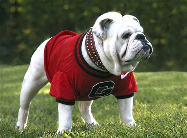 In this undated photo released by the University of Georgia on Wednesday, Oct. 13, 2010, the new Georgia mascot Uga VIII is shown in Athens, Ga.  Uga VIII will replace interim mascot Russ who has been filling after the death of Uga VII last year. Uga VIII will be introduced Saturday before the Bulldogs' game against Vanderbilt. (AP Photo/University of Georgia, Danny White)
