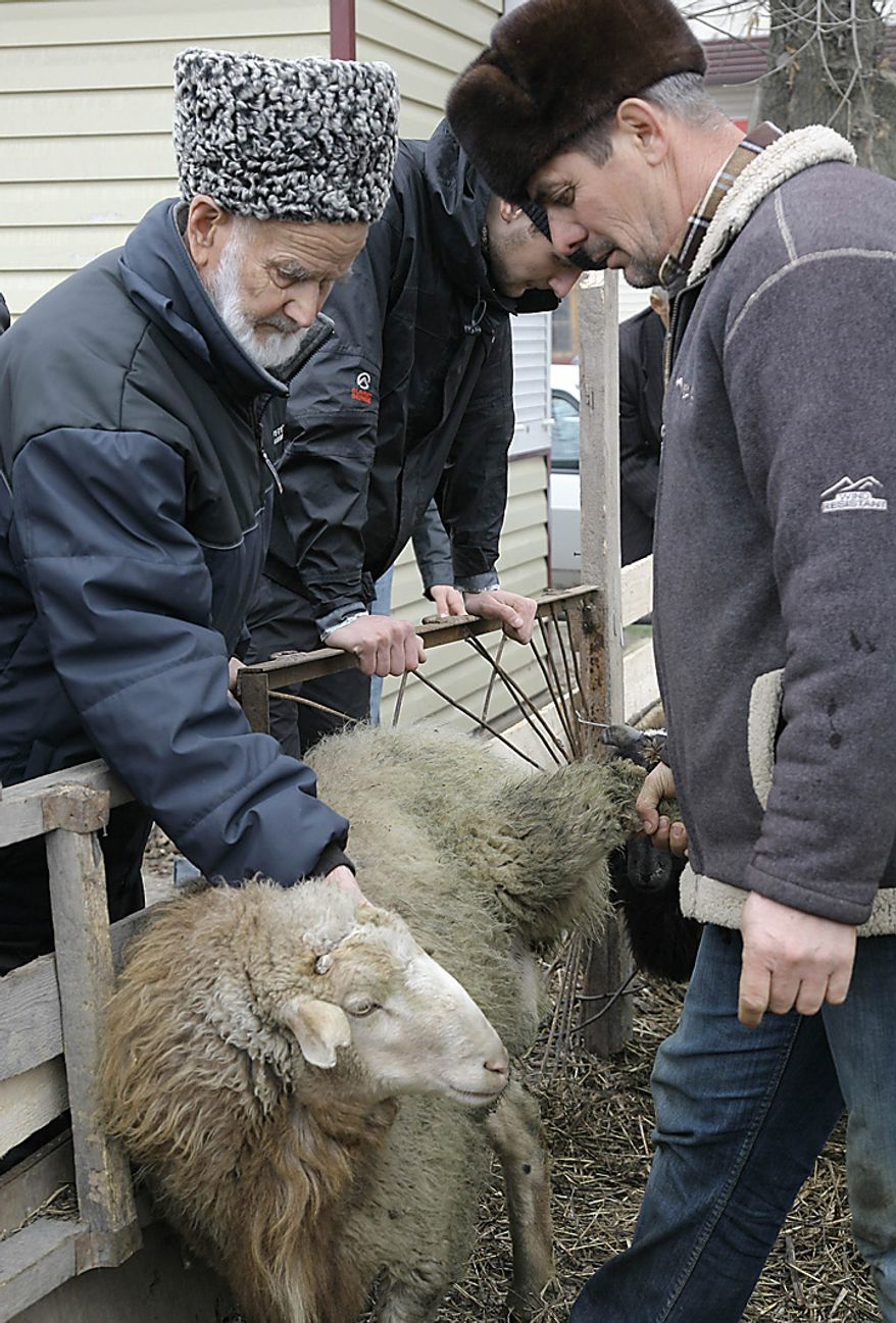 An elderly Chechen man chooses a sheep for sacrifice  in Grozny, Russia, during celebration of the Eid al- Adha, which Muslims in Russia call Kurban-Bairam, on Tuesday, Nov. 16, 2010. Muslims worldwide celebrate Eid al-Adha, or the Feast of the Sacrifice, by sacrificial killing of sheep, goats, cows or camels. (AP Photo/Musa Sadulayev)