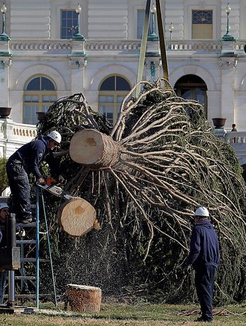 Henry Brady cuts the stump of the Capitol Christmas tree as they work to place it on the West Front of the Capitol in Washington, Monday, Nov. 29, 2010. The tree was cut down earlier this month in the Bridger-Teton National Forest in northwest Wyoming. (AP Photo/Alex Brandon)