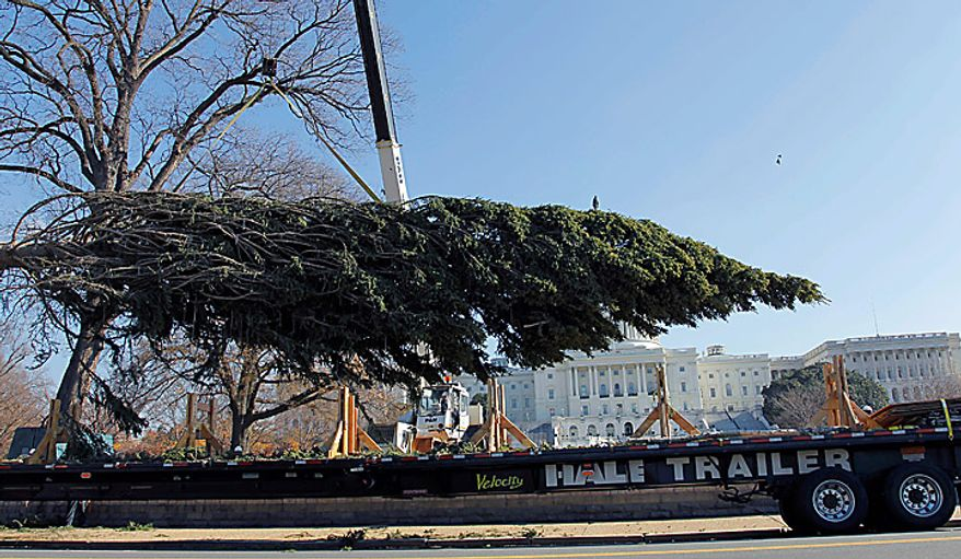 The Capitol Christmas tree is removed from the trailer to be placed on the West Front of the Capitol in Washington, Monday, Nov. 29, 2010. The tree was cut down earlier this month in the Bridger-Teton National Forest in northwest Wyoming. (AP Photo/Alex Brandon)
