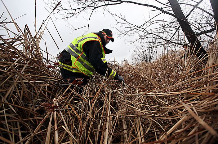 """Ryan Cantrell, a firefighter from the Blissfield Station 73, looks through heavy brush looks as the search for 9-year-old Andrew, 7-year-old Alexander and 5-year-old Tanner Skelton continues behind the Ramada Inn in Holiday City, Ohio on Tuesday, Nov. 30, 2010. Authorities """"do not anticipate a positive outcome"""" in the search for three Michigan brothers who have been missing since their father's attempted suicide, a police chief said Tuesday. (AP Photo/Detroit Free Press, Andre J. Jackson)"""