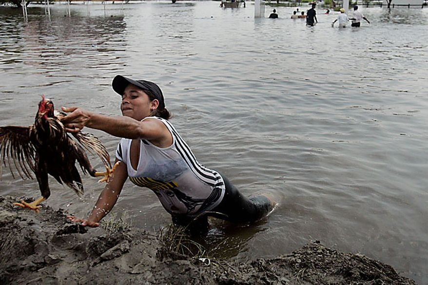 """A worker rescues a chicken from a flooded chicken farm in Palmira, southern Colombia, Tuesday, Nov. 30, 2010.  According to meteorologists the """"La Nina"""" climatic phenomenon is causing an exceptionally wet rainy season that has caused floods and landslides, killing over 130 people throughout Colombia. (AP Photo/Christian Escobar Mora)"""