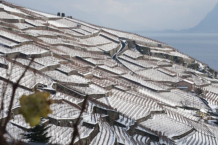 Vineyards of white grapes are covered in snow in the Lavaux region on the shores of the Lake Geneva, in Aran, Switzerland, Thursday, Dec. 2, 2010. The Lavaux Vineyard Terraces have been included into UNESCO's list of world cultural heritage sites in 2007. (AP Photo/Keystone/Laurent Gillieron)