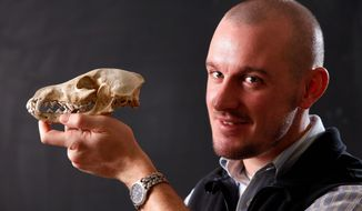 Researcher Samuel Belknap III displays the skull of a domesticated dog on Friday at the University of Maine in Orono. Mr. Belknap found a bone fragment of what he says is the oldest-known domesticated dog in North America while examining waste matter recovered from Hinds Cave. (Associated Press)