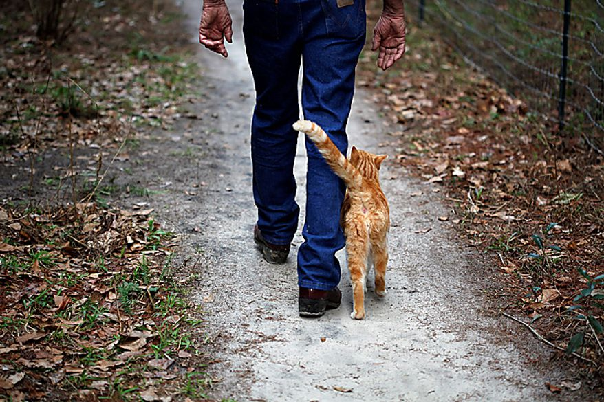 "Craig Grant, who bought 30 acres in Lee, Fla., where he has taken in hundreds of cats at a place called Caboodle Ranch, walks with one of his cats on Thursday,  Jan. 20, 2011. He's created a cat village with a town hall, church, cafe and even a Wal-Mart. He's plagued by accusations of hoarding and mistreatment of the animals. ""They make me love me life,"" he says. ""I never feel alone."" (AP Photo/St. Petersburg Times, Lara Cerri)"