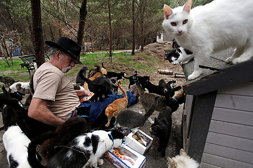 Craig Grant bought 30 acres in Lee, Fla., where he has taken in hundreds of cats at a place called Caboodle Ranch. He's created a cat village with a town hall, church, cafe and even a Wal-Mart. He's plagued by accusations of hoarding and mistreatment of the animals. (AP Photo/St. Petersburg Times, Lara Cerri)