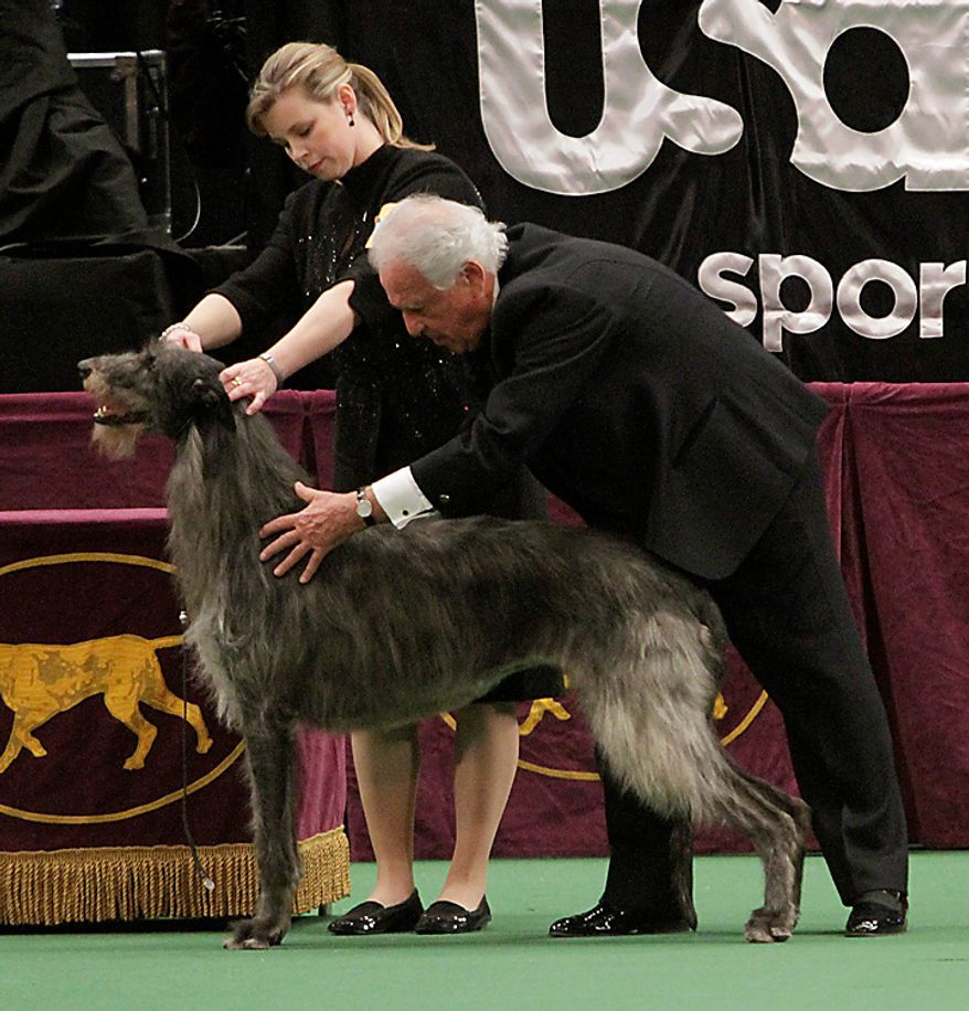 Judge Paolo Dondina, right, inspects Scottish deerhound Hickory during the 135th Westminster Kennel Club Dog Show as his handler Angela Lloyd looks on, Tuesday, Feb. 15, 2011, at Madison Square Garden in New York. Hickory won best in show. (AP Photo/Mary Altaffer)