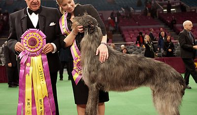 Scottish deerhound Hickory poses for photographers with his handler, Angela Lloyd (right), and judge Paolo Dondina after Hickory won best in show at the 135th Westminster Kennel Club Dog Show on Tuesday, Feb. 15, 2011, at Madison Square Garden in New York. (AP Photo/Mary Altaffer)