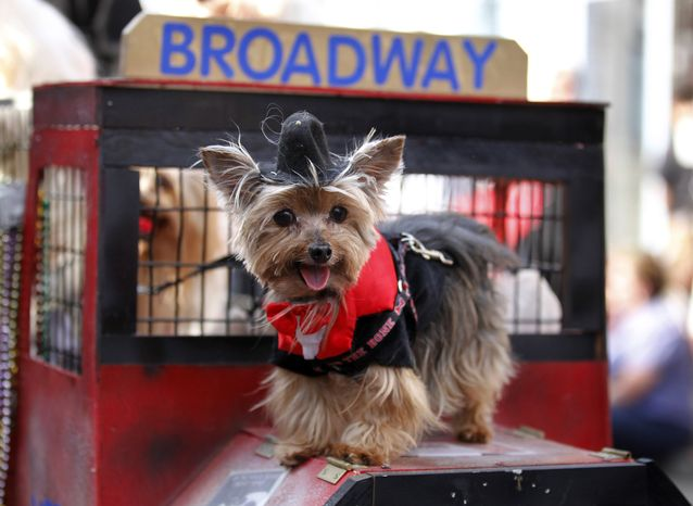 A dog dressed in costume parades through the French Quarter during the Krewe of Barkus Mardi Gras parade in New Orleans on Sunday. The parade of dogs and their owners, a twist on the Krewe of Bacchus, benefits animal welfare organizations. (Associated Press)
