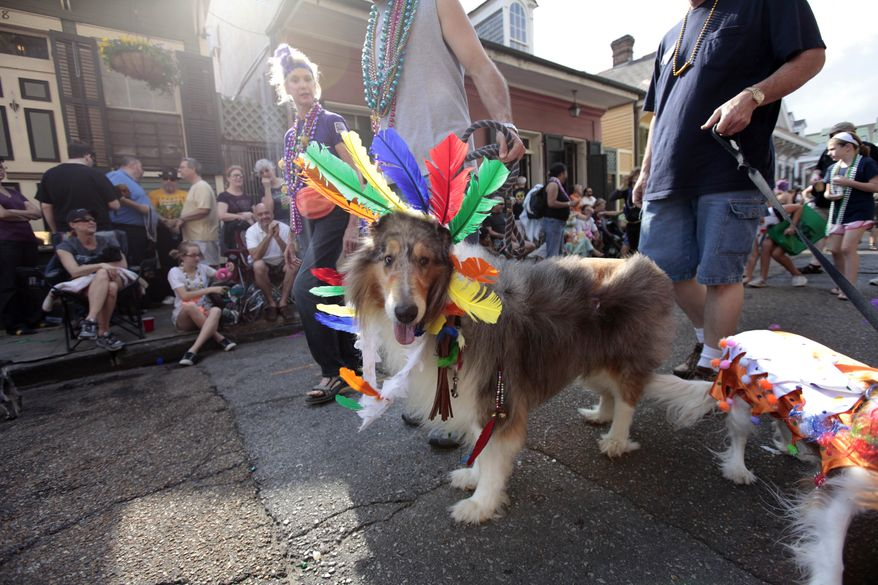 Dog owners and their dogs parade through the French Quarter during the Krewe of Barkus Mardi Gras parade in New Orleans on Sunday. The parade of dogs and their owners, a twist on the Krewe of Bacchus, benefits animal welfare organizations. (Associated Press)