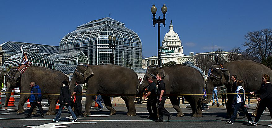 The Ringling Bros. and Barnum & Bailey Circus' annual Pachyderm Parade makes its way up Washington Avenue Southwest in Washington, passing the United States Botanic Garden and the U.S. Capitol on its way to the Verizon Center on Tuesday, March 22, 2011. (Barbara L. Salisbury/The Washington Times)