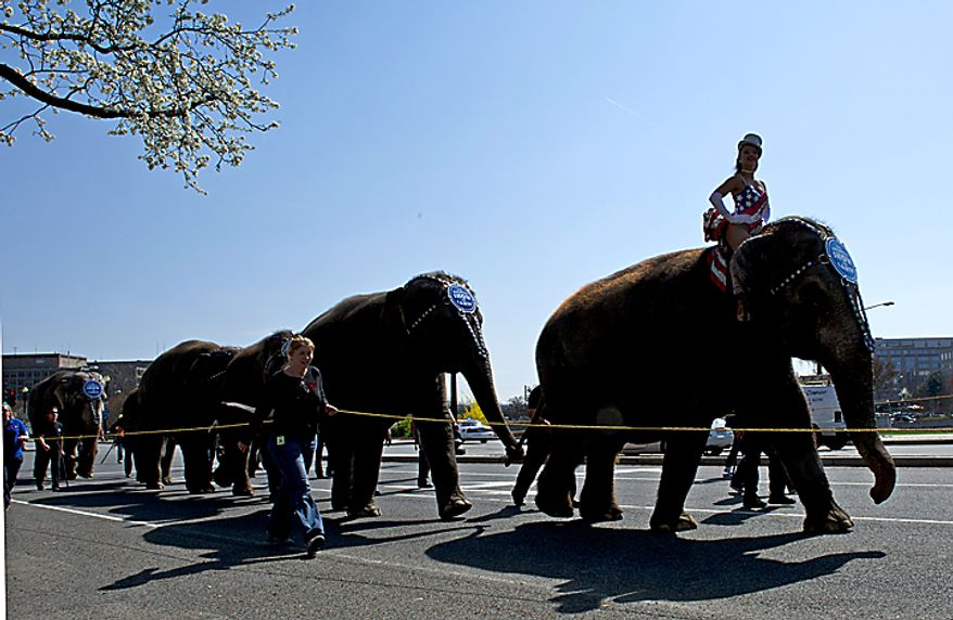 The Ringling Bros. and Barnum & Bailey Circus announces its arrival in Washington with its annual Pachyderm Parade from a train depot in Southwest to the Verizon Center, where the circus will perform. (Barbara L. Salisbury/The Washington Times)