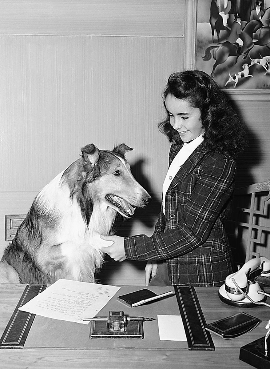 "In this 1943 file photo, 11- year-old Elizabeth Taylor is shown with Lassie around the time of her performance in ""Lassie Comes Home"" in Los Angeles. Publicist Sally Morrison says the actress died Wednesday, March 23, 2011 in Los Angeles of congestive heart failure at age 79. (AP Photo/File)"