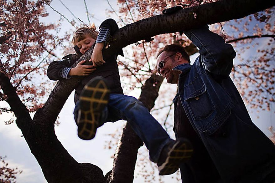 Max Gerecht, 7, swings from a cherry blossom tree while his dad Reuel Gerecht looks on near the Tidal Basin, in Washington, D.C., Sunday, March 27, 2011. The family is from Bethesda, Md. (Drew Angerer/The Washington Times)