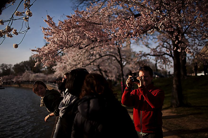 At right, Joshua Bell, of Washington, D.C., takes a photo of family by the cherry blossoms near the Tidal Basin, in Washington, D.C., Saturday, March 26, 2011. (Drew Angerer/The Washington Times)