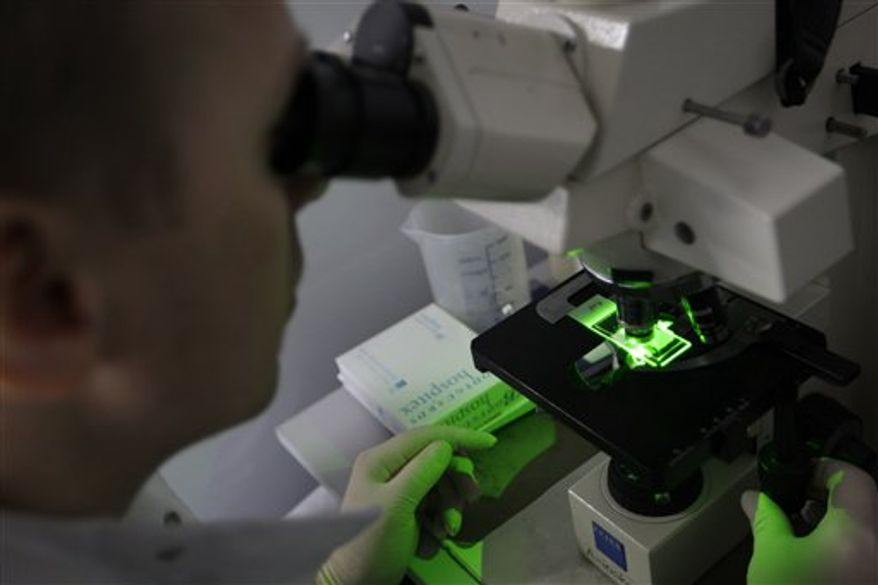Bacteria use for producing anti-body against malaria are seen through a microscope at Westminster University in London, Tuesday, March 15, 2011. In a cramped London laboratory filled with test tubes, bacteria and mosquitoes, scientists are trying to engineer a new weapon in the battle against malaria: a mutant fungus.  For years, Angray Kang at Westminster University and colleagues have been testing whether they could genetically tweak a fungus to kill the malaria parasite carried by mosquitoes. (AP Photo/Sang Tan)