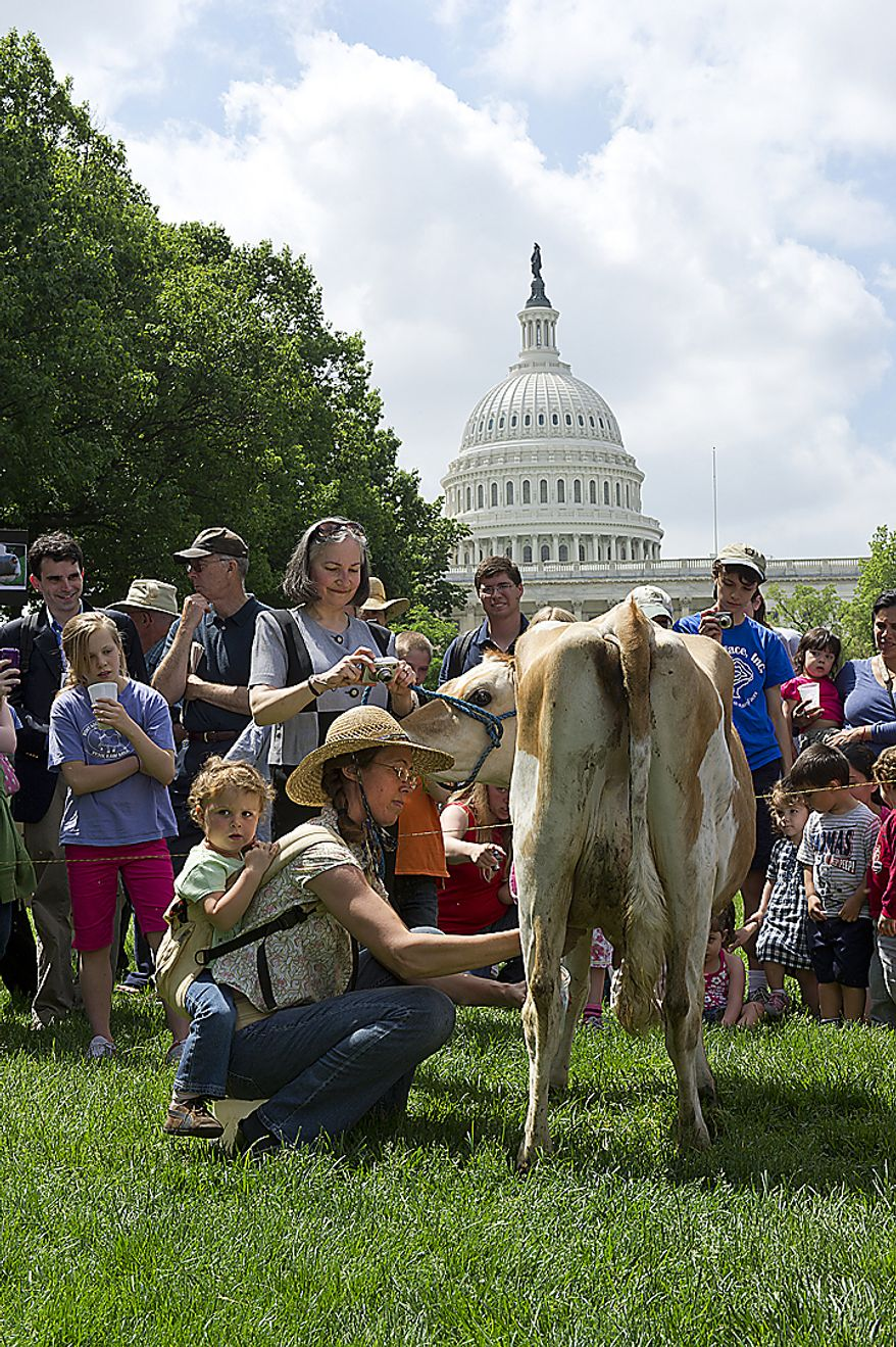 Leah Mack of Union Bridge, Md., milks Morgan the cow at Upper Senate Park in Washington, D.C., Monday, May 16, 2011 during a rally held by the organization Grassfed on the Hill to protest the sting operation the FDA conducted against Pennsylvania dairy farmer Dann Allgyer and his private buying customers. On Mack's back is her daughter, Hope Faris, 2. (Barbara L. Salisbury/The Washington Times)