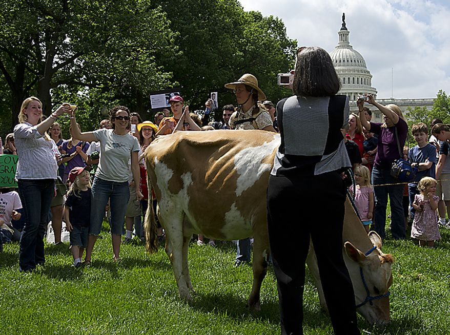 Liz Reitzig of Bowie, Md., far left, and Karine Bouis-Towe of Takoma Park, Md., clink glasses before drinking fresh milk from Morgan the cow at a rally at Upper Senate Park in Washington, D.C., on Monday, May 16, 2011. The organization Grassfed on the Hill held the rally to protest the sting operation the FDA conducted against Pennsylvania dairy farmer Dann Allgyer and his private buying customers. The rally included samples of fresh milk, and Morgan the cow was also milked on site. (Barbara L. Salisbury/The Washington Times)