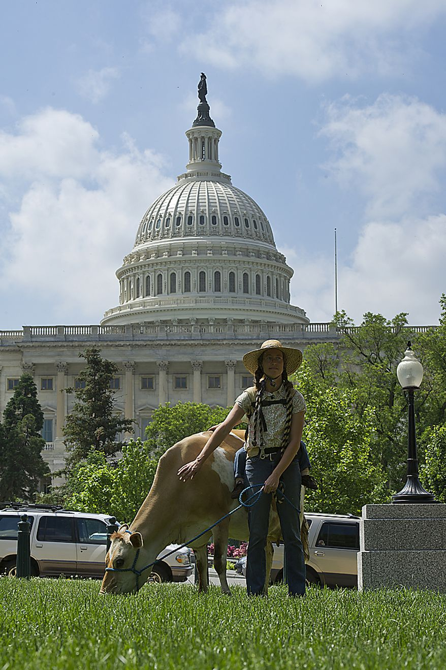 Leah Mack of Union Bridge, Md., pets Morgan the cow on the grass at Upper Senate Park in Washington, D.C., on Monday, May 16, 2011. The organization Grassfed on the Hill held a rally at the park to protest the sting operation the FDA conducted against Pennsylvania farmer Dann Allgyer and his private buying customers. Morgan the cow was brought in from Bellevue Dairy in Glen Arm, Md., to be milked on site, and people drank her fresh milk. (Barbara L. Salisbury/The Washington Times)