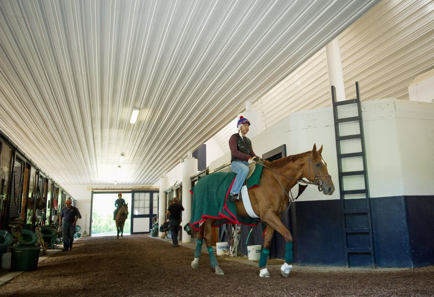 Preakness: Animal Kingdom is ridden by David Nava as he takes a trot inside a cool stable at Fair Hill Training Center in Elkton, Md. The Kentucky Derby winner is a 2-1 favorite to win the Preakness at Pimlico on Saturday. A victory would position the thoroughbred to make a run at the Triple Crown, which hasn't been won since Affirmed did it in 1978. (Rod Lamkey Jr. / The Washington Times)
