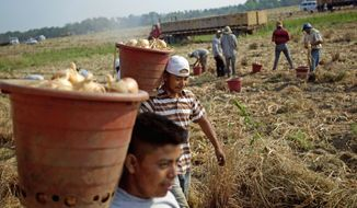 **FILE** Fieldworkers pick onion bulbs on a Vidalia onion farm in Lyons, Ga., on May 10. Concerns abound that new legislation meant to bar illegal immigrants from the workforce and giving local police increased enforcement powers will scare away Mexican laborers. (Associated Press)