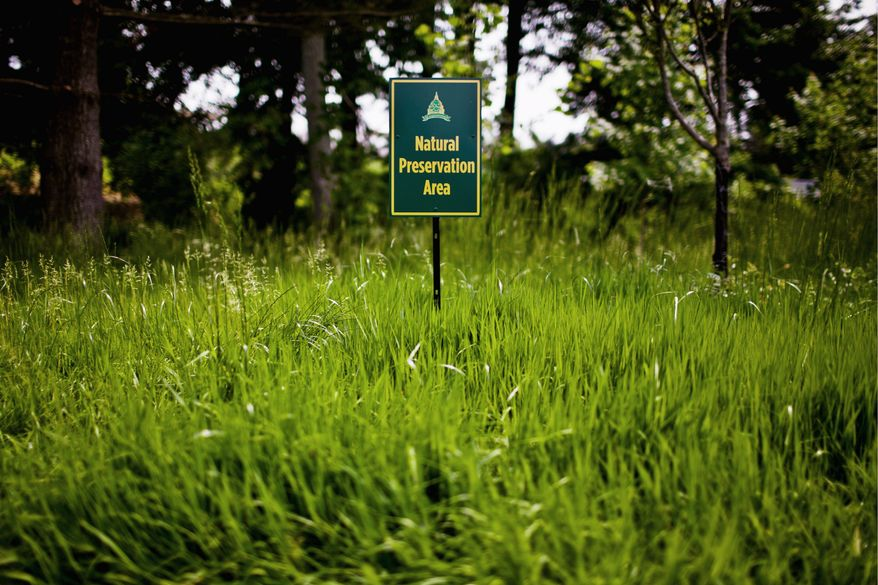 """Long grass (a """"Natural Preservation area"""") awaits errant balls throughout the course at Congressional Country Club in Bethesda, site of the U.S. Open. (Drew Angerer/The Washington Times)"""