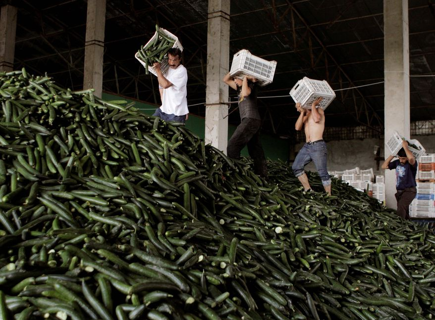 ASSOCIATED PRESS Workers collect cucumbers for disposal at a greenhouse outside Bucharest, Romania, on Monday. Producers destroyed thousands of tons of cucumbers in Europe over the past two days in reaction to the E. coli outbreak.