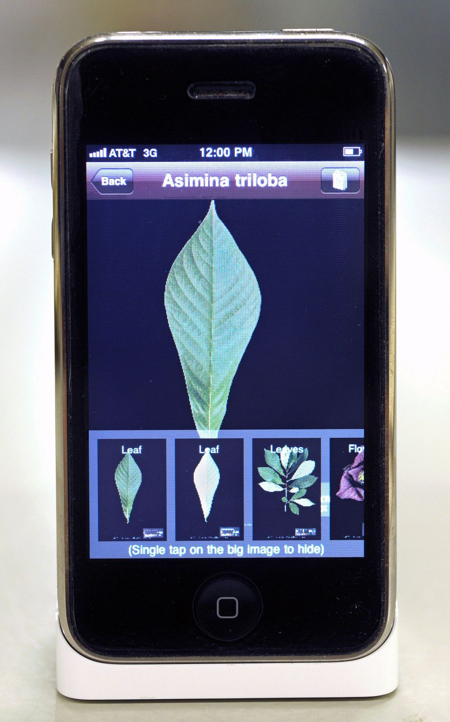 """W. John Kress displays the Leafsnap app on his iPhone along with tree leaf specimens at the Smithsonian Natural History Museum's specimen storage room in Washington. The free app """"is going to be able to populate a database of every tree in the United States,"""" he said. """"I mean that's millions and millions and millions of trees, so that would be really neat."""" (Associated Press)"""