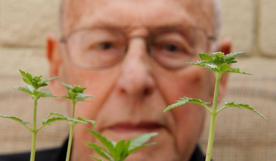 Medical marijuana user Joe Schwartz, 90, shows some of his marijuana plants at his home in Laguna Woods, Calif., earlier this month. Mr. Schwartz is a 90-year-old great-grandfather of three who enjoys a few puffs of pot each night before he crawls into bed. (Associated Press)