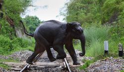 **FILE** In this photograph from July 30, 2009, a wild elephant crosses a railway track along Deepor Beel, a wildlife sanctuary on the outskirts of Gauhati, India. (Associated Press)