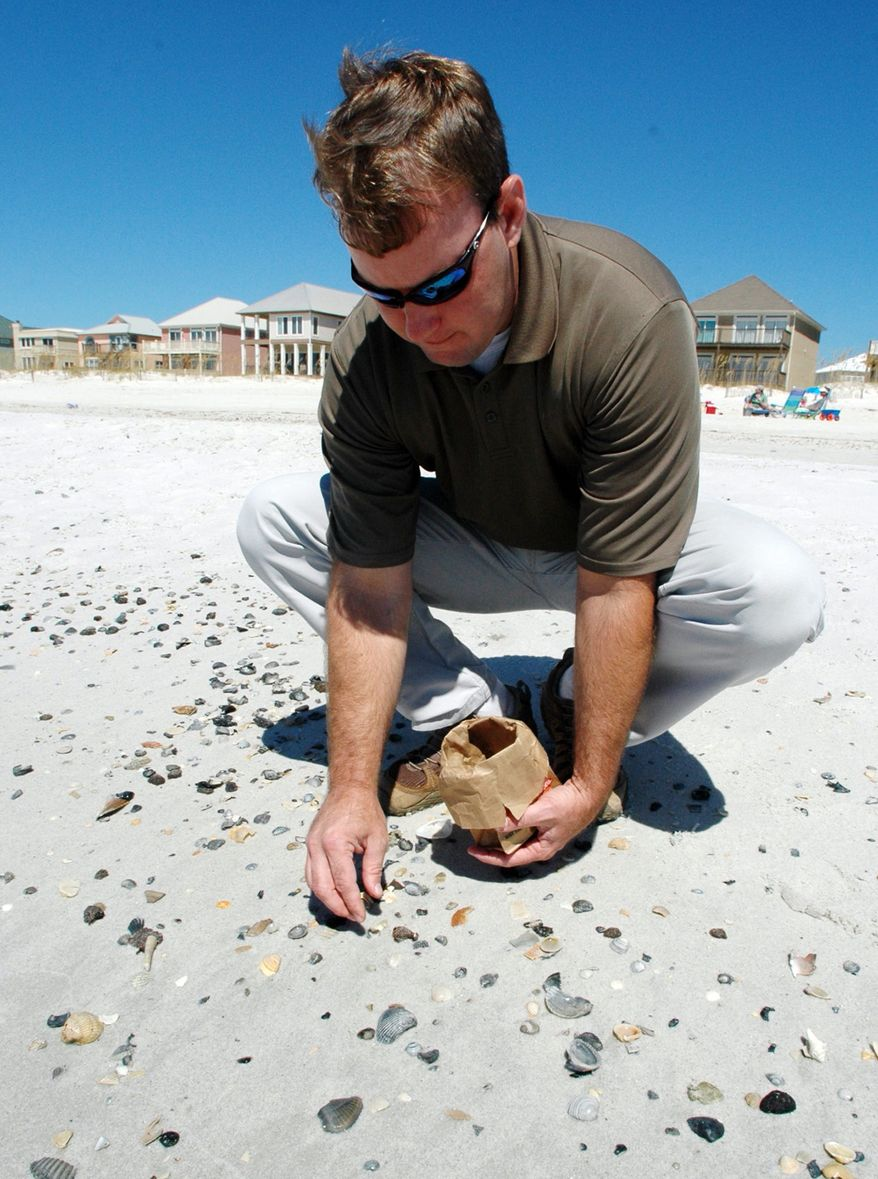 Brandon Franklin picks up a tar ball washed in by Tropical Storm Lee from amid shells at Gulf Shores, Ala., on Sept. 6, 2011. Franklin, coastal plans manager for the city, said the tar balls are suspected of being pieces of submerged tar mats left over from the BP oil spill in the Gulf of Mexico. (Associated Press)
