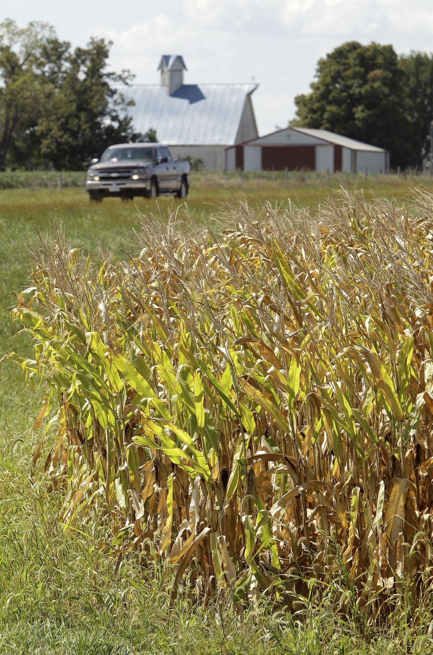 ASSOCIATED PRESS A truck passes a cornfield near an intersection Thursday in Palmyra, Iowa. Tall stalks obstructing drivers' views are an increasing fall hazard in the Corn Belt as farmers expand their fields closer to the edges of roads.