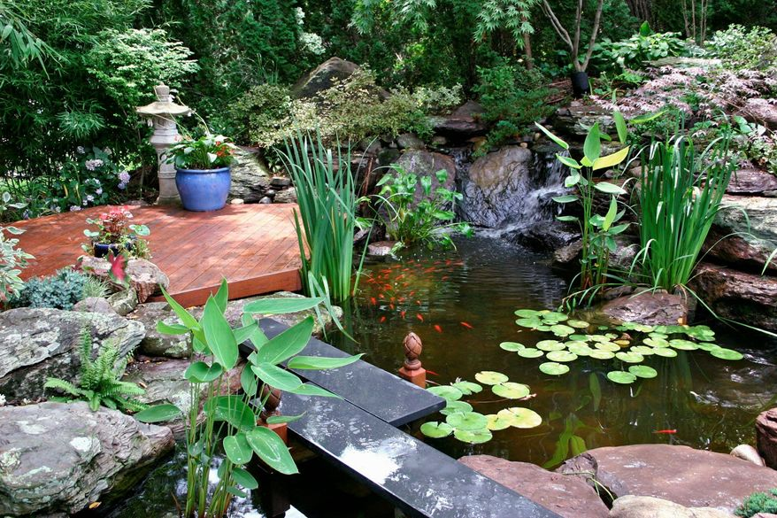 Homeowners should be aware that ponds with fish may attract other wildlife, such as raccoons, hawks and blue herons.