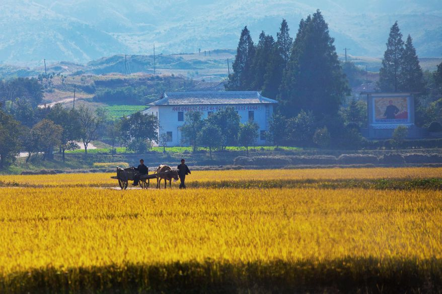 North Korean farmers walk along a road through a farm field outside the eastern coastal city of Wonsan. This autumn, as farmers fan out into fields of corn, wheat, rice and cabbage, such pastoral scenes obscure the problems that the communist state has adequately feeding its people, especially the children. (Associated Press)