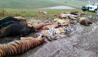 Carcasses are scattered on the ground at the Muskingum County Animal Farm in Zanesville, Ohio, on Wednesday, Oct. 19, 2011. Sheriff's deputies shot 48 animals, including 18 rare Bengal tigers and 17 lions, after Terry Thompson, owner of the private farm, threw their cages open Tuesday and then committed suicide.  (Associated Press)