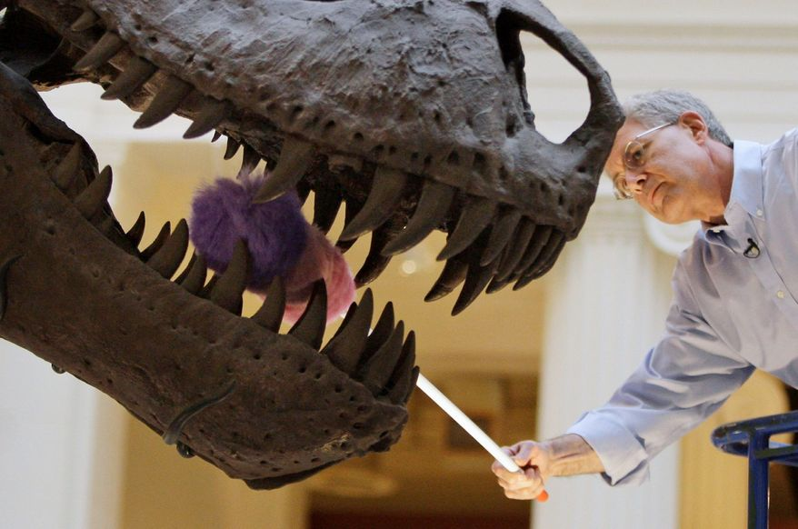 """**FILE** Bill Simpson, collections manager of fossil vertebrates at Chicago's Field Museum, dusts the teeth of the Tyrannosaurus rex skeleton known as """"Sue"""" on display at the museum on May 12, 2010. (Associated Press)"""