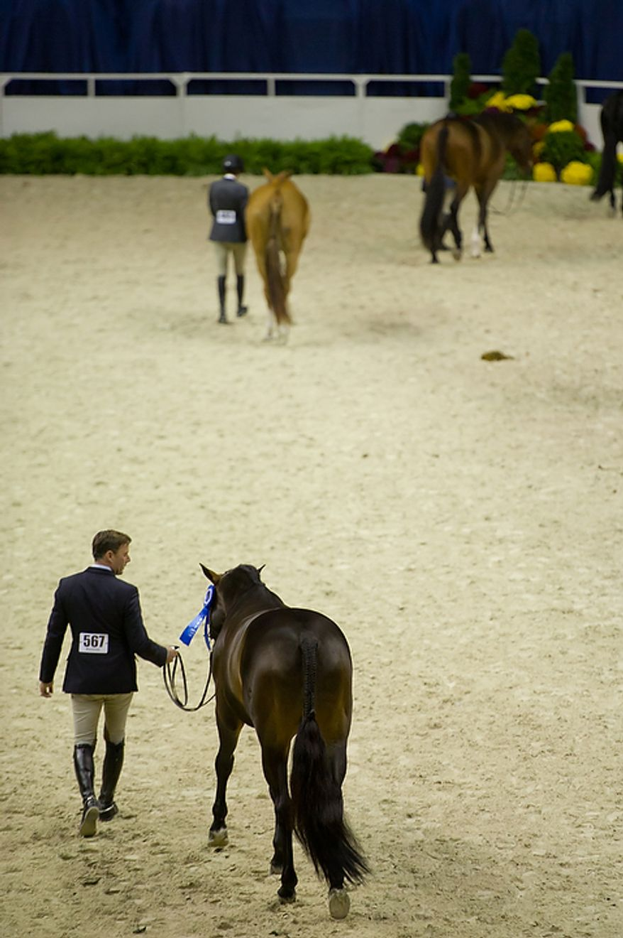 """Scott Stewart of Wellington, Fla., walks his horse """"Reality"""" back to the stables after winning first place in the 1st Year Green Working Hunter competition at the annual Washington International Horse Show on Oct. 25, 2011, in D.C. The event runs Oct. 25-30 at the Verizon Center and features top riders and horses competing from the U.S. and abroad. (Andrew Harnik/The Washington Times)"""